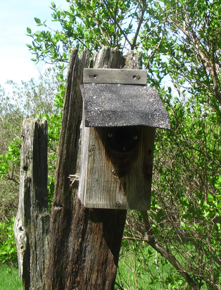 Before Buying A Birdhouse Birdhouse Features